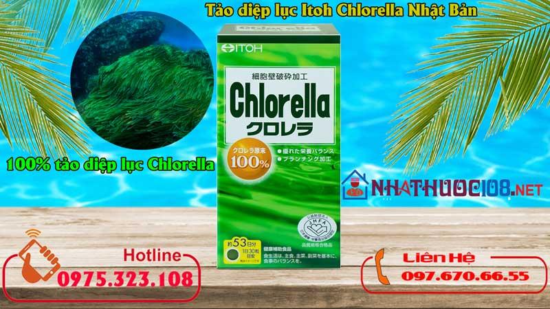 Thành phần Viên uống Tảo diệp lục Itoh Chlorella Nhật Bản